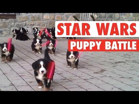 Star Wars: The Force Awakens Puppies Parody    Lightsaber Puppies Battle - UCPIvT-zcQl2H0vabdXJGcpg