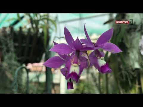 Vườn hoa lan độc đáo ở Little Saigon