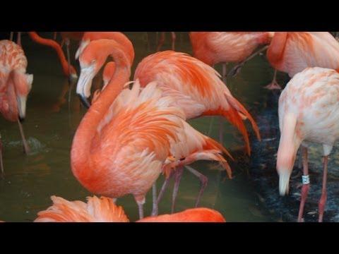 Thế giới động vật: sức mạnh của sắc màu