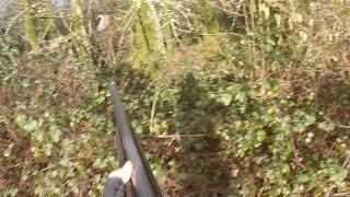 Tir d'une bécasse à 5 mètres !!!