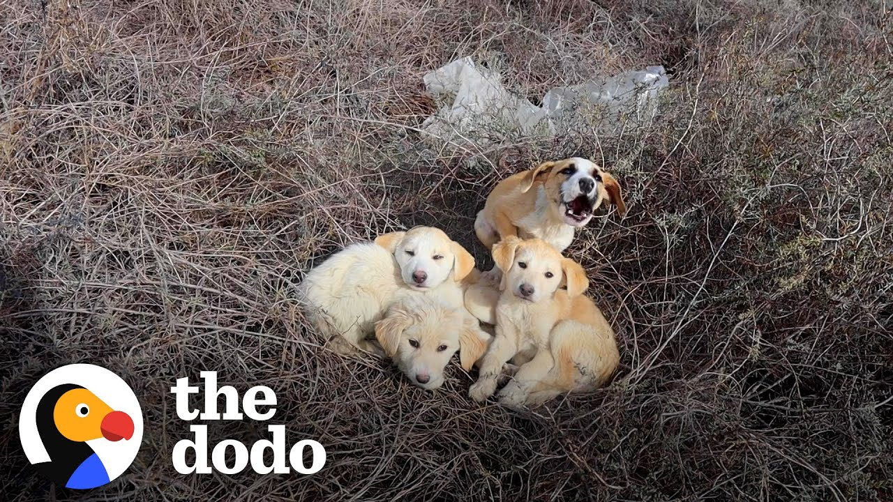 Couple Won't Give Up Trying To Catch Stray Puppy   The Dodo Faith = Restored