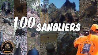 Compilation de 100 sangliers
