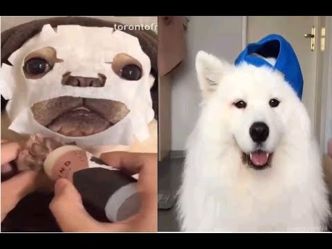 Funny and Cute Pets Videos Compilation 2019 | CatsTV 🐶🐶🐯🐯