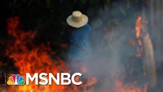 Brazilian President Jair Bolsonaro To Send Troops To Battle Amazon Fires | Hardball | MSNBC