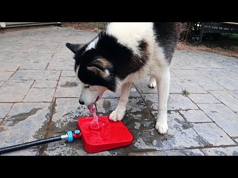 What is Dog Water Fountain? - UCe_vXdMrHHseZ_esYUskSBw