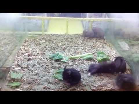 Hamster Shake