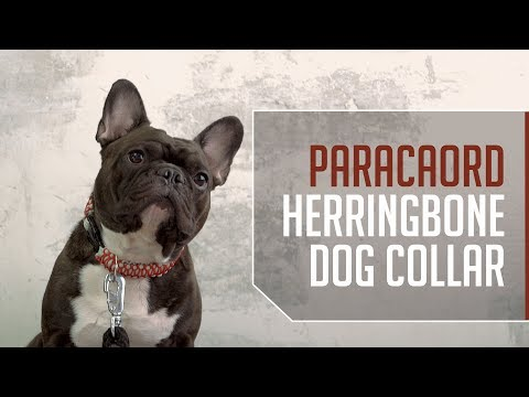 Paracord Herringbone Dog Collar