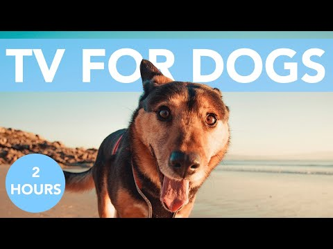 TV for Dogs! How to Calm My Dog TV with Relaxing Music!