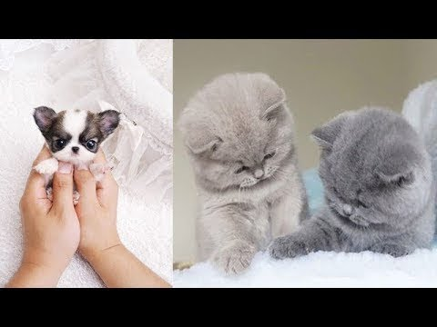 ♥Cute Dogs and Cats Doing Funny Things 2018♥ #9 - FunnyAnimals - UCq5hgY37WAryZCwmehDyCaQ