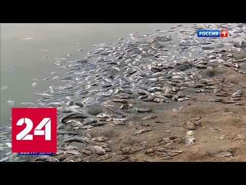 Нехватка кислорода и засуха привели к экологической катастрофе в Калмыкии