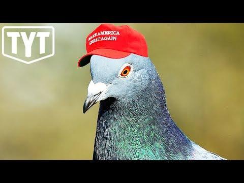 MAGA Pigeons Invade Vegas