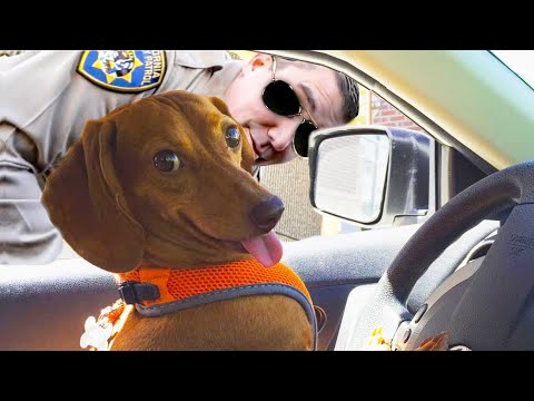Funny And Cute Dog 🐶 Videos That Will Make You Laugh All Day Long 🤣 - UC09IvZwjpunzrdHH1EHok-w