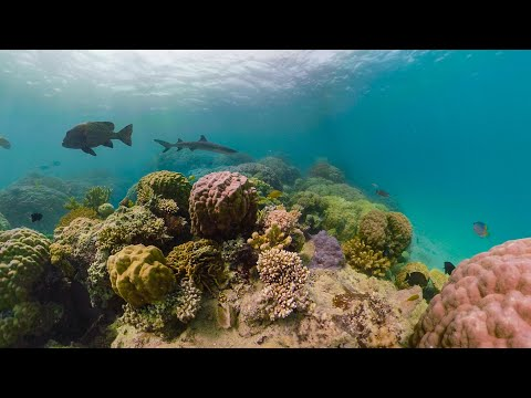 GoPro Awards: Fusion Reef Radio