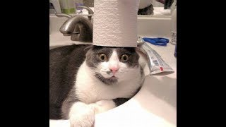 Funny Cat Compilation Funny Videos #1