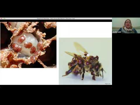 Varroa Mite IPM: Part 1 – Varroa mite biology and life history