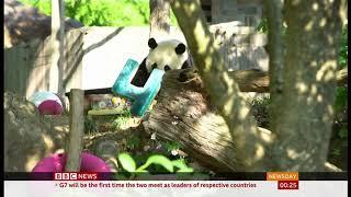 Panda bear turns four (fun story) (USA) - BBC News - 23rd August 2019