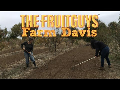 2016 Grantee, Farm Davis - The Fruitguys Community Fund