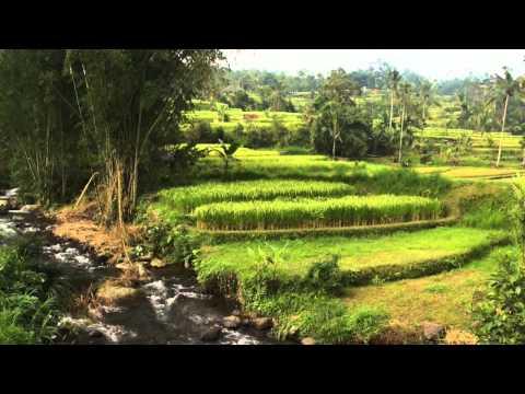 Subak - UNESCO World Heritage - UC0CnBvS9Idj7-6PVFrvehQw