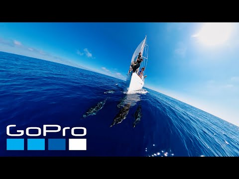 GoPro Awards: Sailing with Dolphins