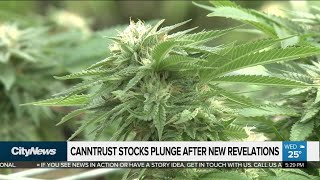 Canntrust stock plunges further after new allegations