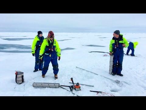 Mercury in the Arctic