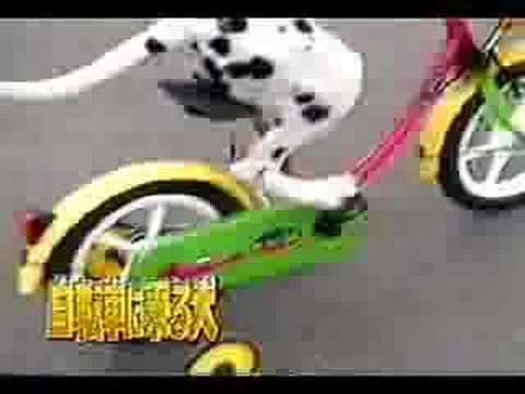 Dog ride bike