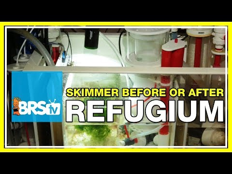 FAQ #29: Should I run my protein skimmer before or after my refugium?