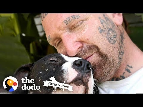 Guy Fills His Home With Pitties No One Wants    The Dodo Pittie Nation