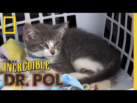 Treating a Very Sick Kitten | The Incredible Dr. Pol