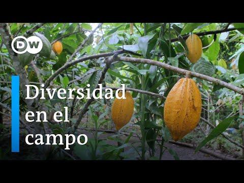 Sistemas agroforestales de Costa Rica