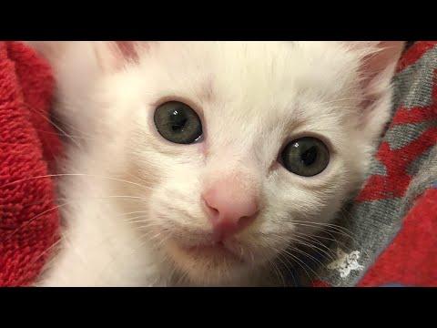 Cute Kittens In My Lap (No Music/No Talking) - UCsYOBKmHxJWzVqtjldyMw0g