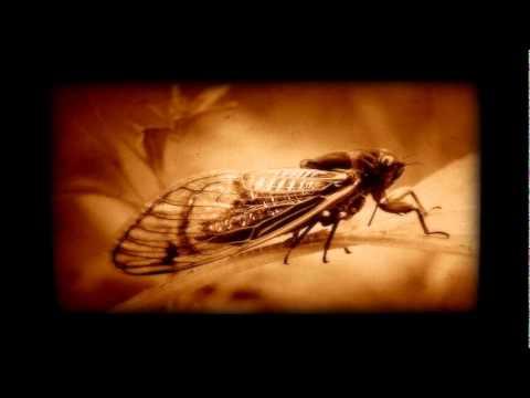 Exoplanet - Cicadenzang (Original Mix) - UCpx5fu0RswkUZ4koAKB3uJw