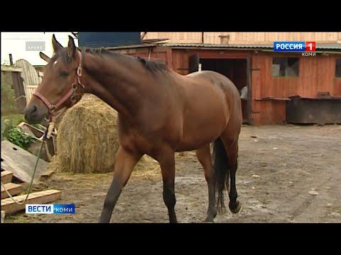 В Выльгорте введен карантин по лептоспирозу лошадей