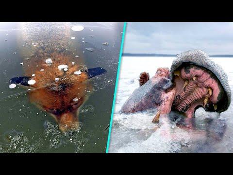 10 Животных, Замороженных Во Времени