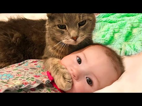 Cute babies and Cats playing together - Funniest Home Videos 2020