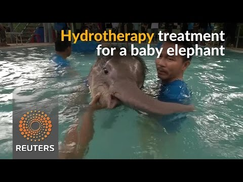 In Thailand, vets use hydrotherapy to treat baby elephant