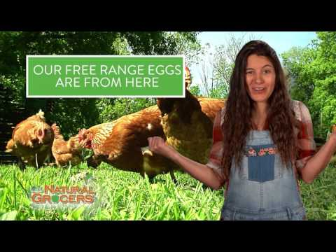 Here vs Here- Free Range Eggs 2