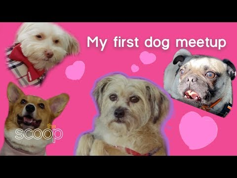 The Scoop: Gemma's First Dog Meetup | The Pet Collective