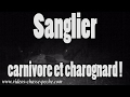 Sanglier, carnivore et charognard !