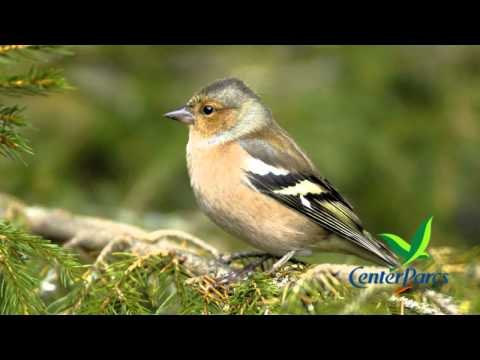 Live bird song from Center Parcs UK - number 4