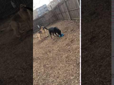 Adopt Hero on Adopt-a-Pet.com