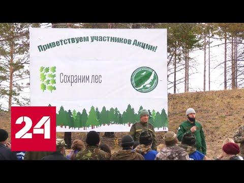Нацпроект помогает восстанавливать леса в Бурятии