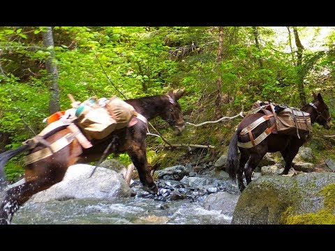 These firefighting mules go where trucks and helicopters cannot - UCcyq283he07B7_KUX07mmtA