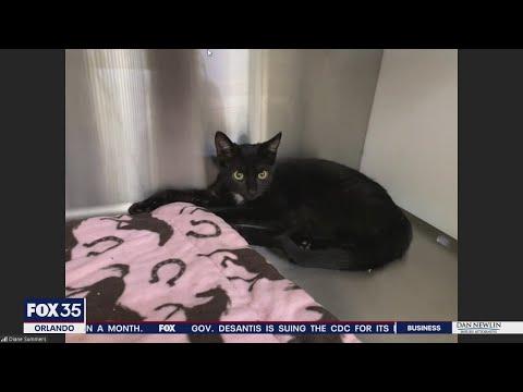 Adopt-a-pet: Cute kittens up for adoption - UCuXT13wiqK56NR7QSfDWpvg