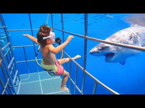 Funniest Moments Baby Meet Animals December- Funny Animals Reaction | baby shark doo doo - UC5-Vfq-dFfj6R77-OFMEn7w
