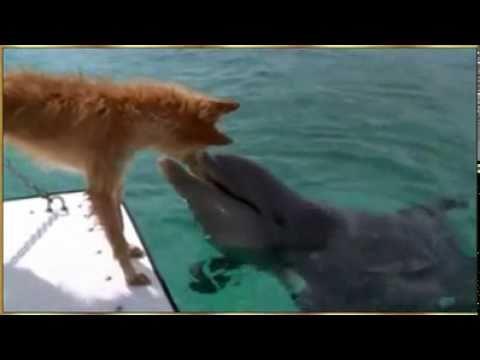 دلفن ينقذ كلب