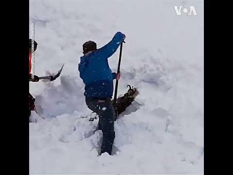 Áo: Giải cứu sơn dương bị kẹt trong tuyết lở  (VOA)