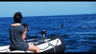 Fukushima news; GANG RAPE Ghislaine Maxwell Jeffrey Epstein TerraMar PROTECTING THE OCEAN,, WHO IS