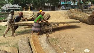 Hot Summer Cutting Wood by Skilled Workers।Dangerous Wood Cutting at Hot Summer।Wood Cutting Skills