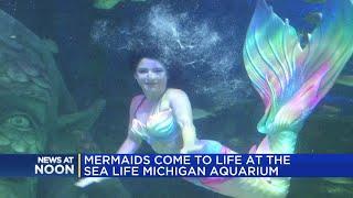 Mermaids come to life at the SEA LIFE Michigan aquarium